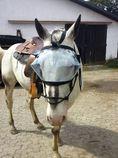 Hilfe f r blinde pferde pro blind horse aus liebe zum - Blinde fensterscheiben kann man reinigen ...