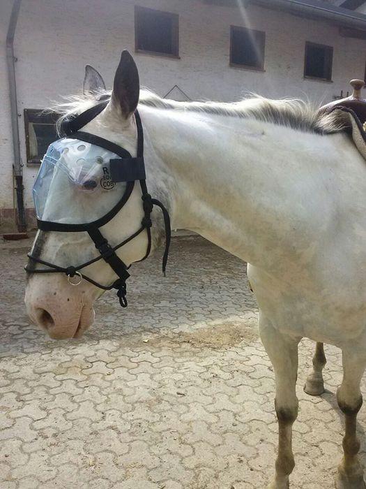 hilfe f r blinde pferde pro blind horse aus liebe zum blinden pferd von ellen drost. Black Bedroom Furniture Sets. Home Design Ideas